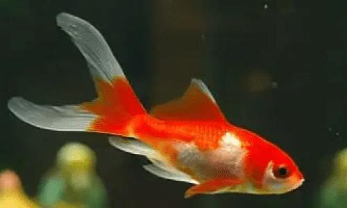 Tips til valg av fiskefôr til akvariefisk