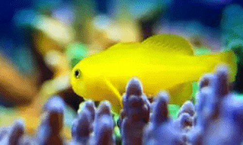 Hvordan rense og vedlikeholde et akvarium?