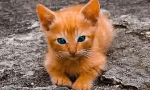 Tips til deg som skal anskaffe katt