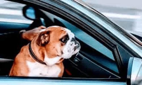 Hundebur – Kort guide til kjøp