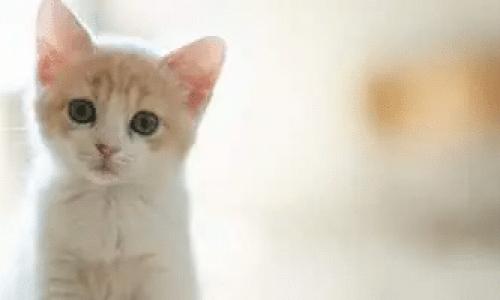 Stell av katt – Tips og gode råd