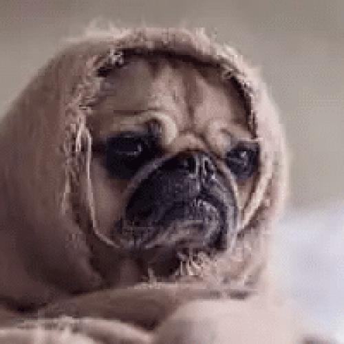 Hvordan få fin pels på hunden?